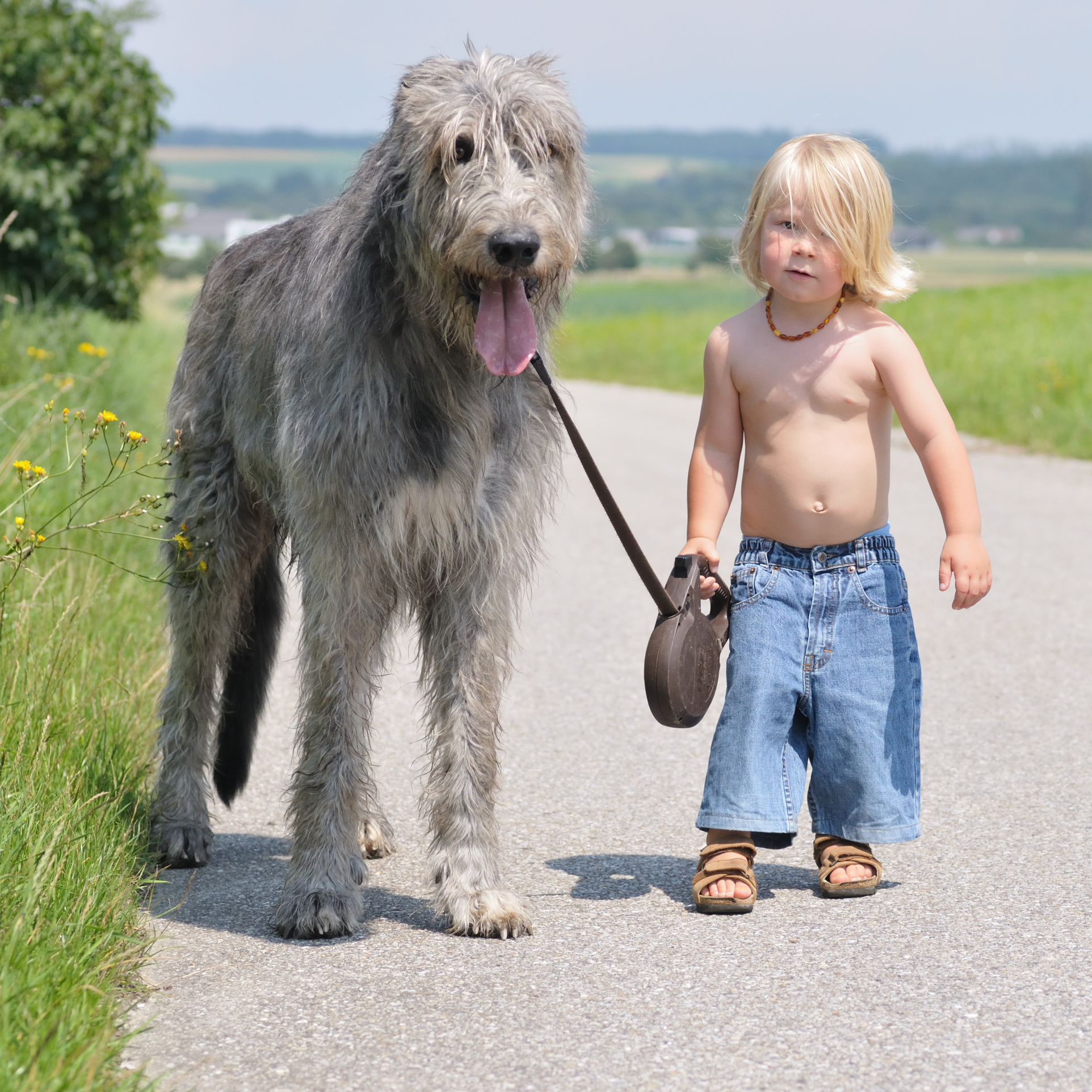 Kleinere Hunde können durchschnittlich bis zu 15 Jahre alt werden (Dackel), ...